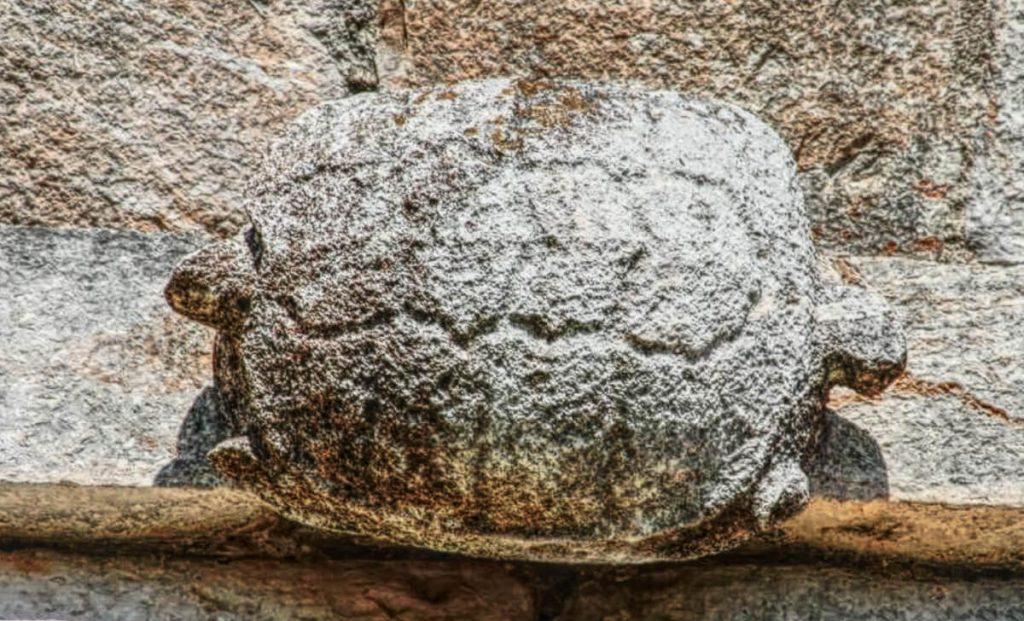 Tortuga en el Templo de las Tortugas Uxmal